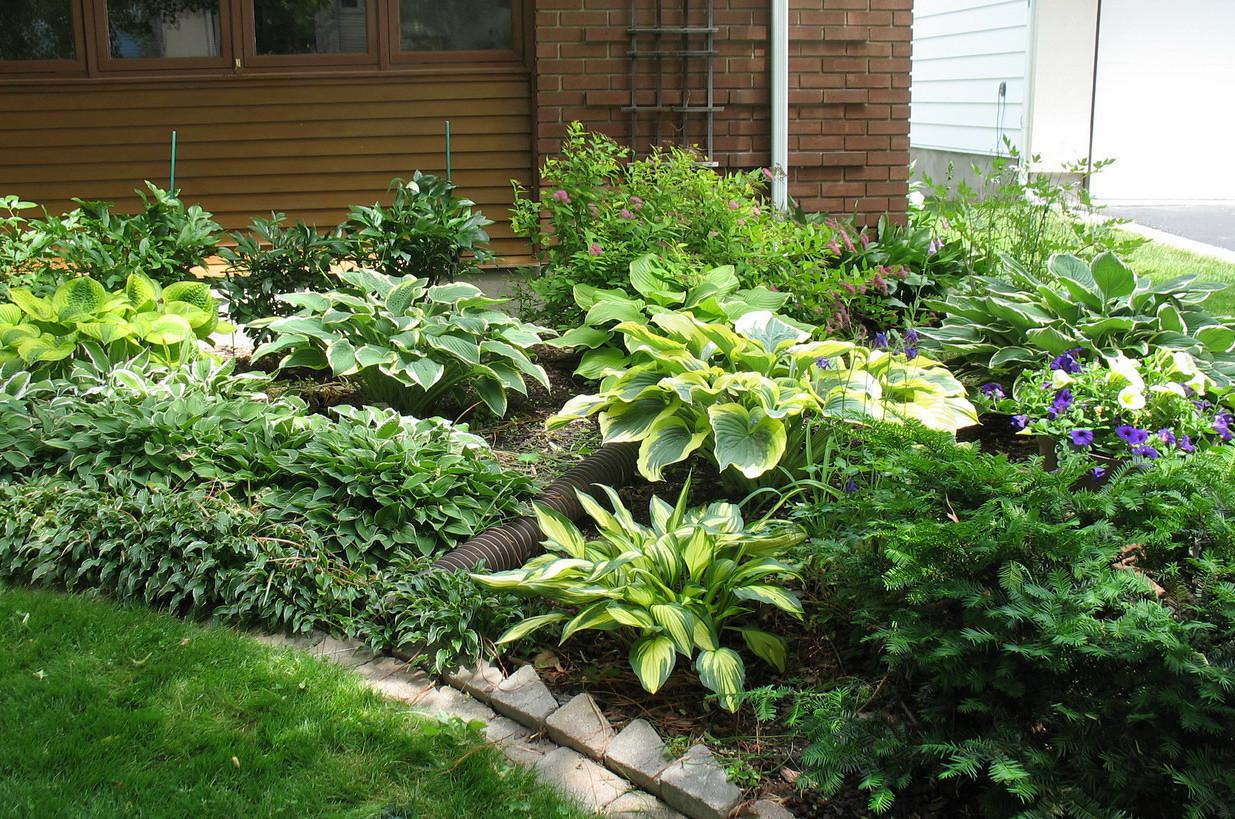 Part of the front garden, June 22, 2011
