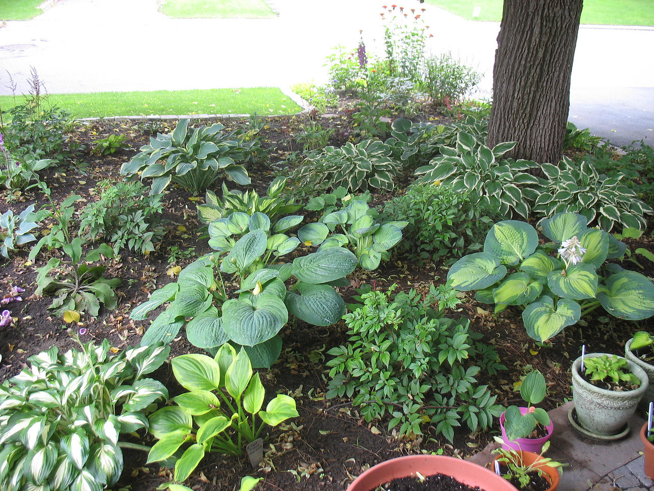 A section of my front garden - 2008.