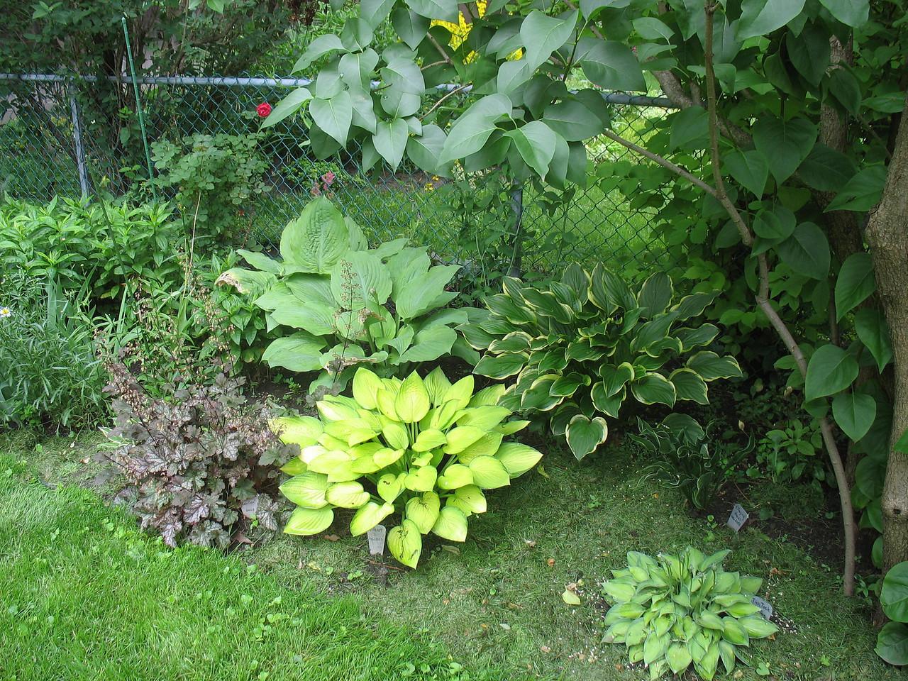 Side garden in the back yard - 2008