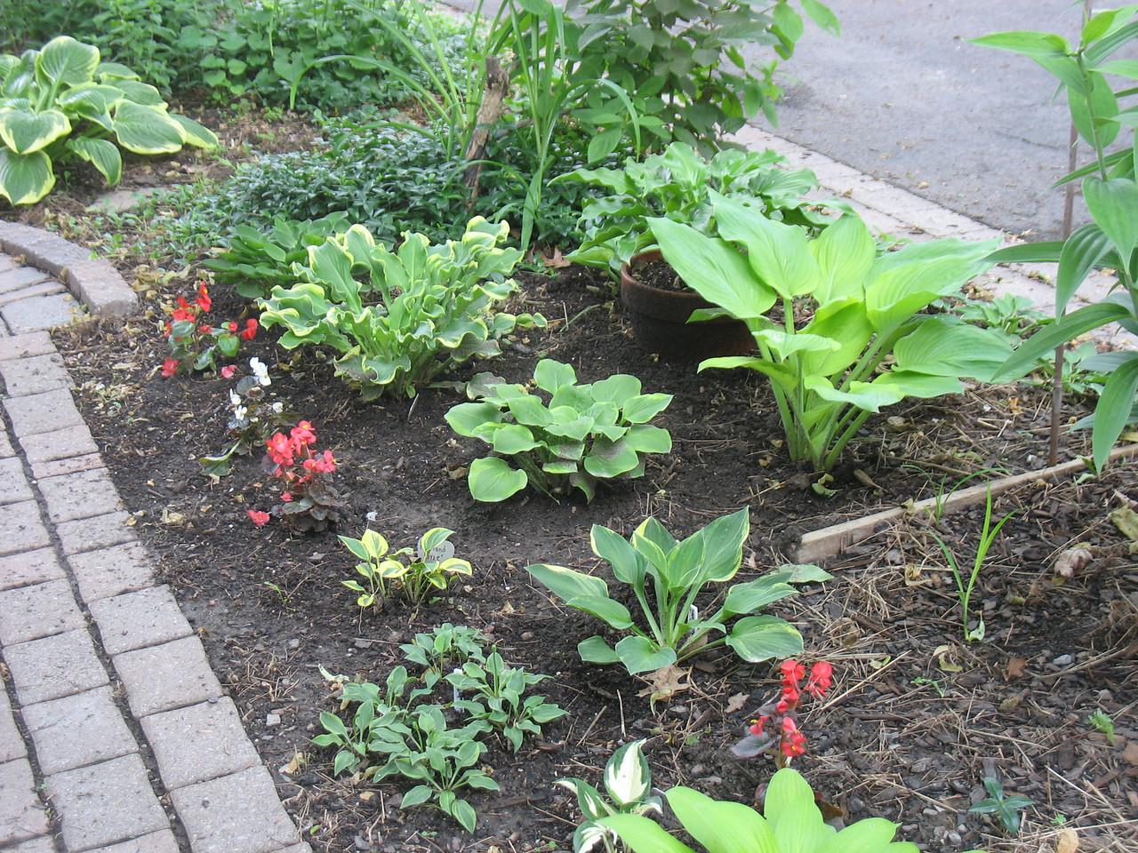 My newest garden, June 13, 2013