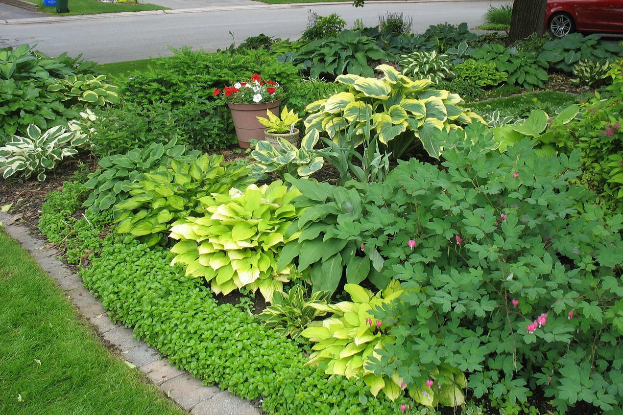 Part of the front garden June 17, 2013