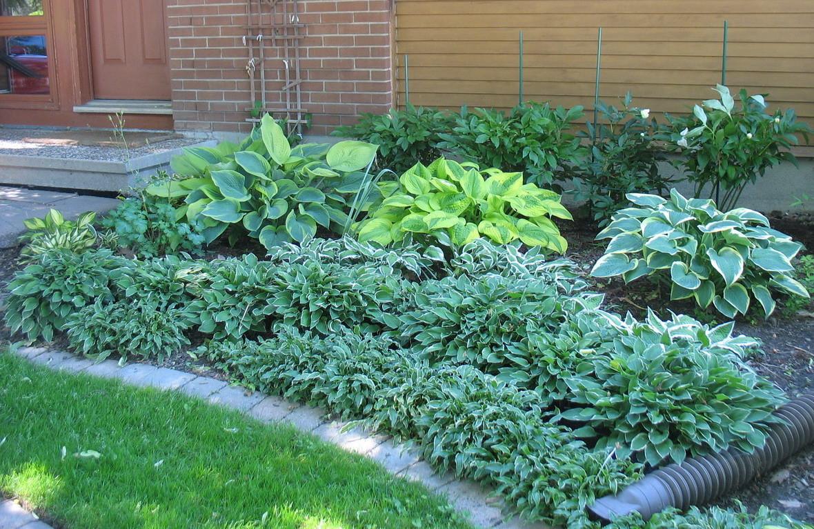 Front garden in mid June 2012.