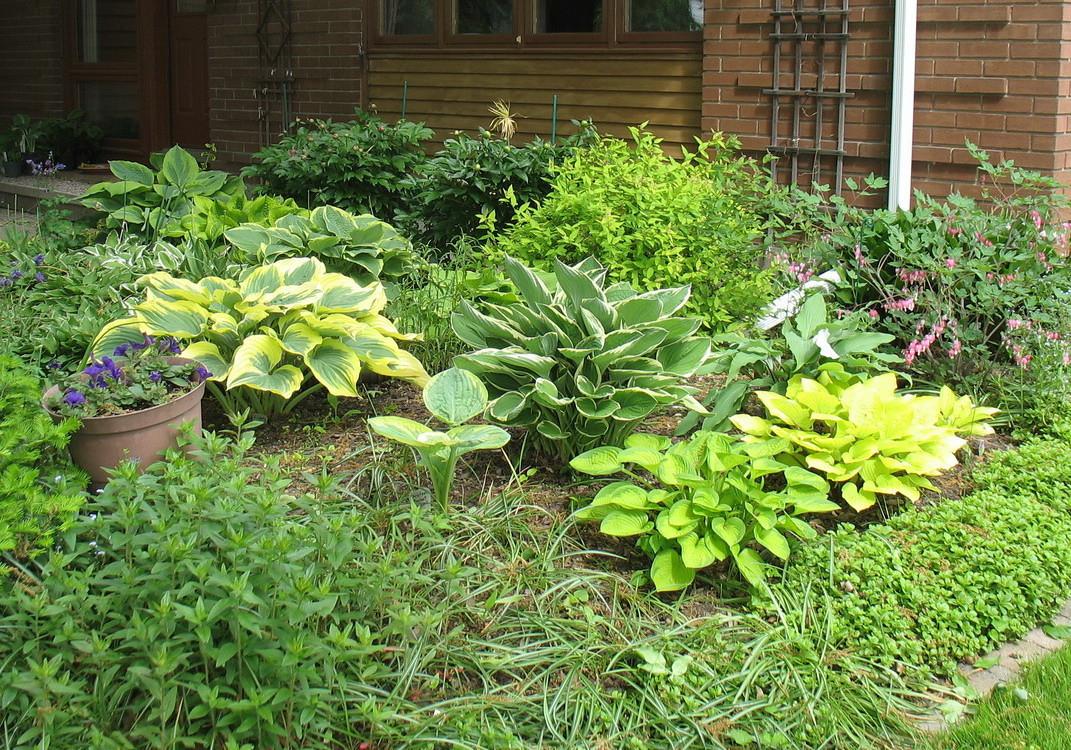 Front garden 2011.