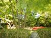 Japanese Tea Garden 2010