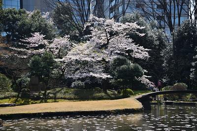 Koishikawa Kourakuen-Spring