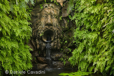 CAV27579 - Giardino La Mortella, Ischia