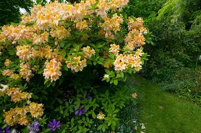 rododendro nel passaggio tra G3 e G4