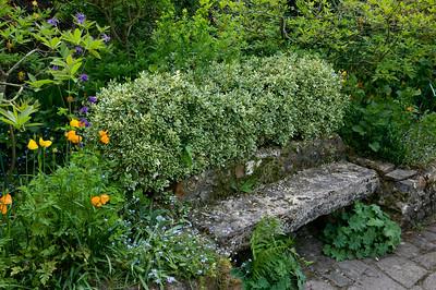 arbusto formato lungo una panchina in pietra
