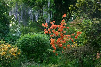 la fioritura del rododendro spicca tra gli arbusti del G4