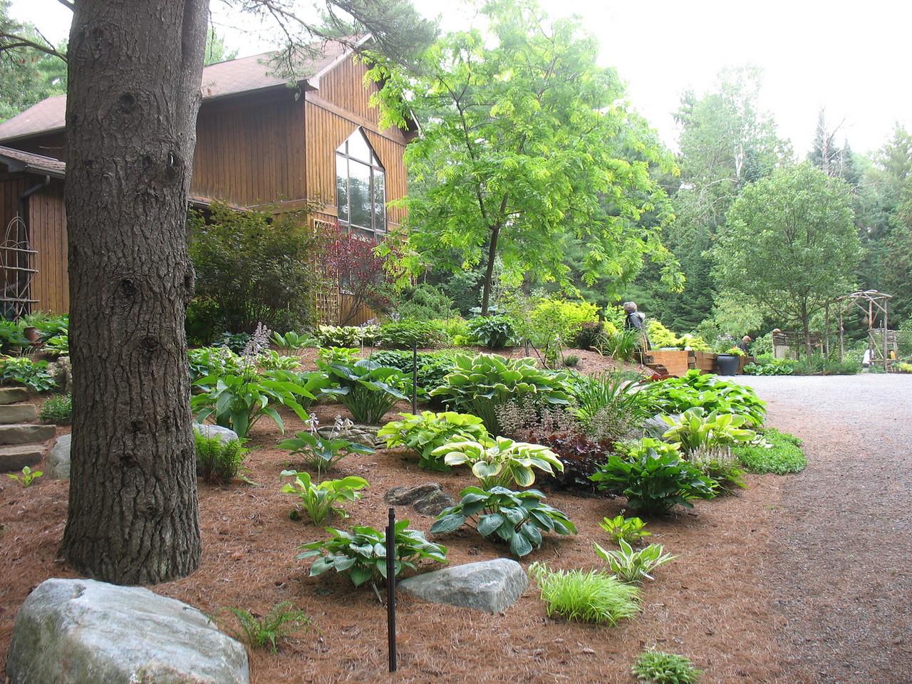 Sandy's lovely rural garden.