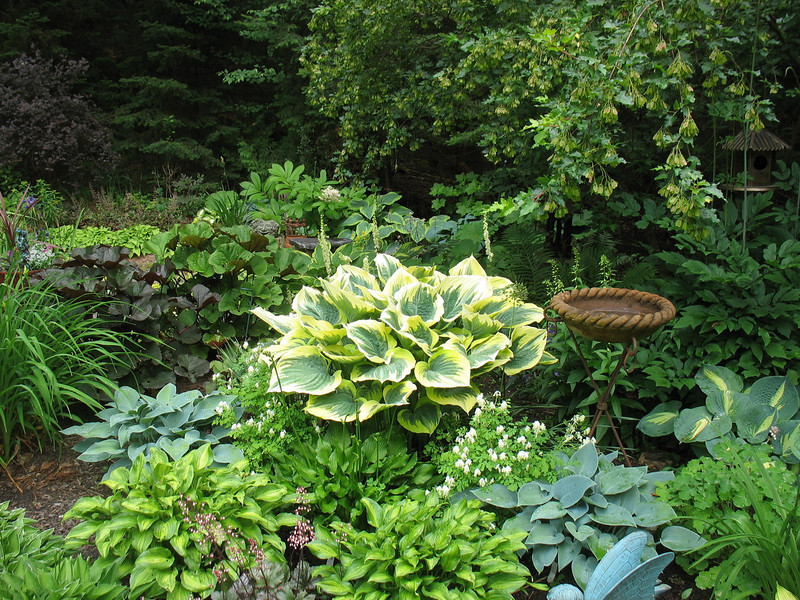 The large hosta is a spectacular 'Liberty'. Nicest one I've seen.