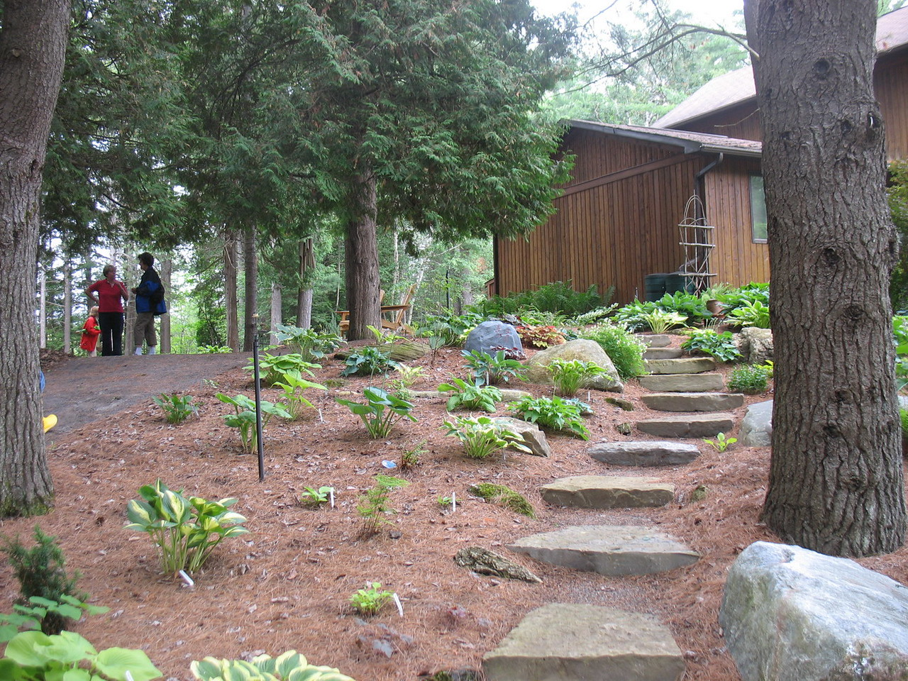 One of her newer gardens where the hostas are not so large.