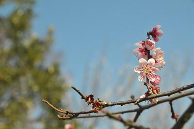 Odawara Flower Gardens