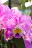 Pacific Orchid & Garden Expo 2017