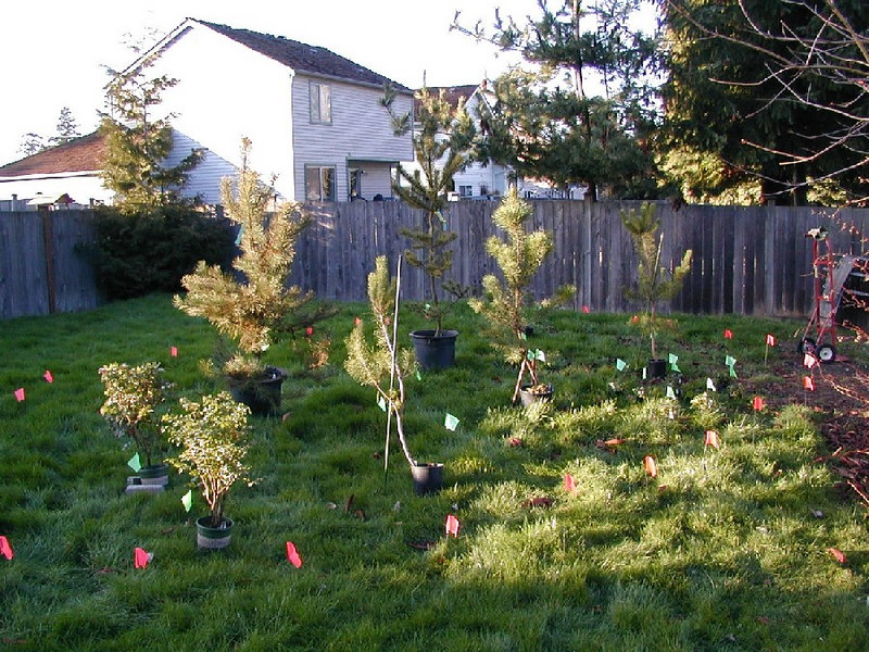 You gotta start somewhere. Here's what I started with- all lawn. Initial planting area flagged out & plants chosen. February 2003.
