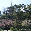 Three layered pagoda brought in from Tomyoji in Kyoto