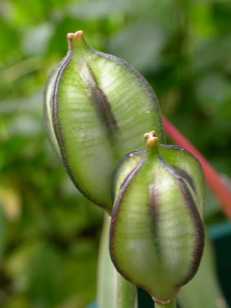 Seeds, pods and leaves