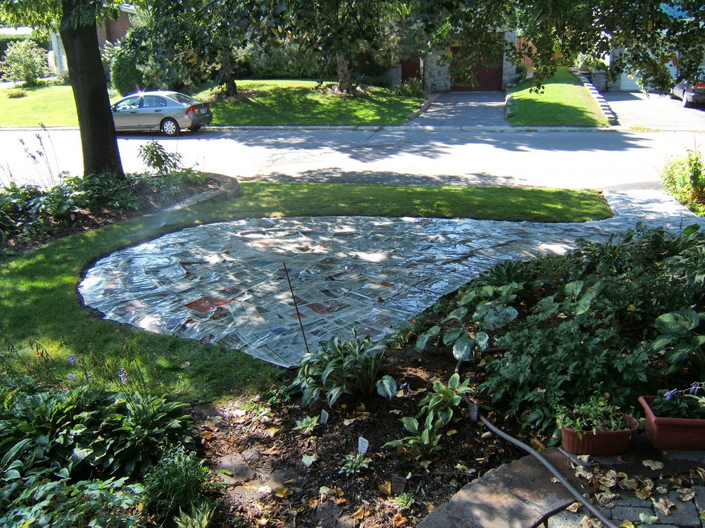 Once edged, the entire garden was covered with a thick (several sections)layer of newspaper and watered well. I also left most of the sod which I lifted upside down under the newspaper and spread a layer of fresh grass clippings as well.