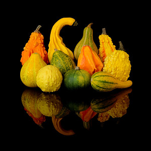 autumn harvest gourds