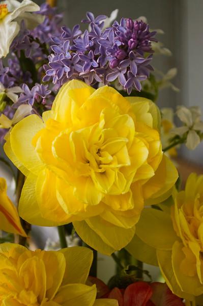 Narcissus 'Sweet Pomponette'