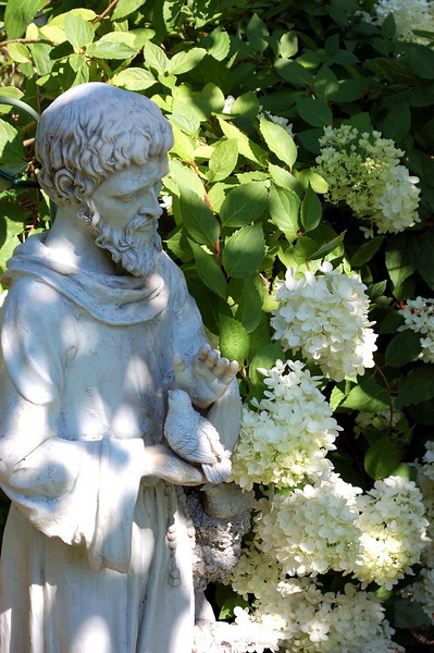 Hydrangea with St. Francis statue