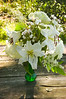 bouquet, mid-summer (liliy, hydrangea, phlox, false spirea)