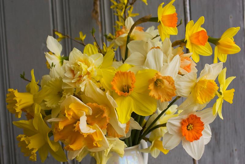 bouquet, spring (daffodil, forsythia)