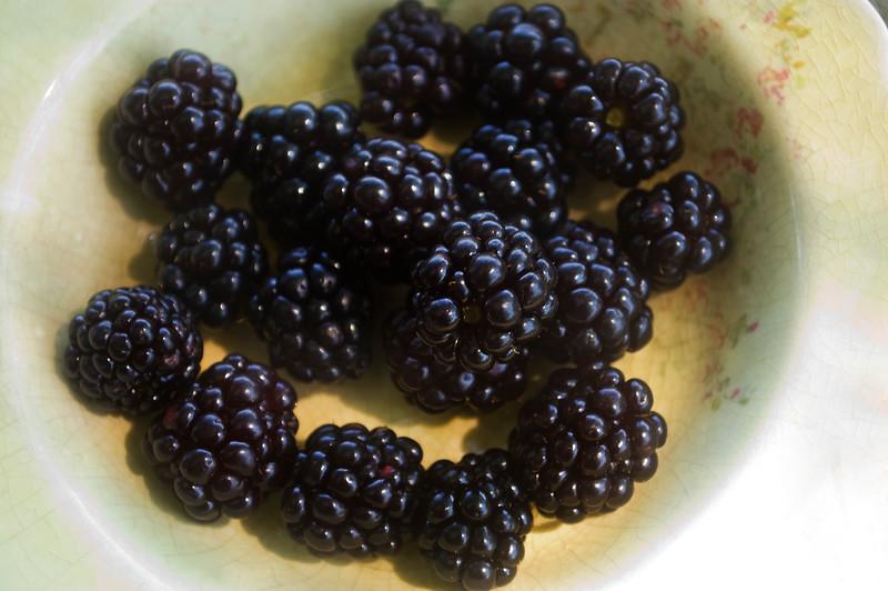 Rubus (blackberries) in heirloom bowl