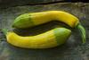 Cucurbita pepo 'Zephyr' (summer squash)