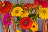 Zinnias and Calendulas