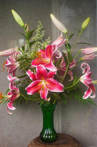 Lilium orientalis 'Stargazer'