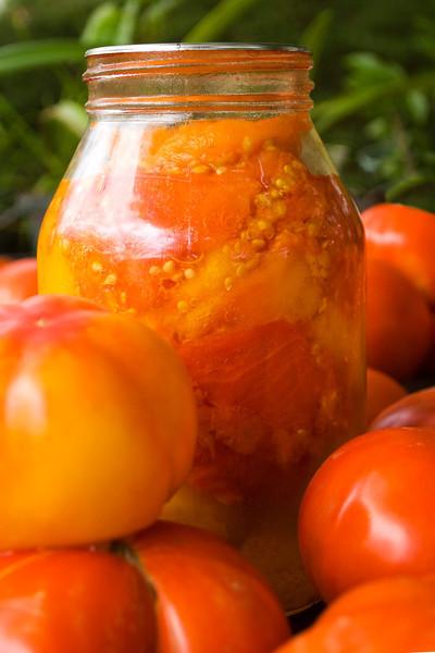 Solanum lycopersicum (tomatoes)