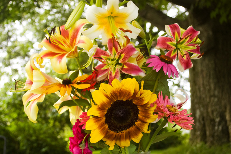 bouquet, mid-summer (liliy, coneflower, black-eyed Susan, zinnia, rose)