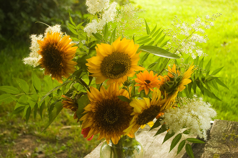 bouquet, summer (sunflowers and false spirea)