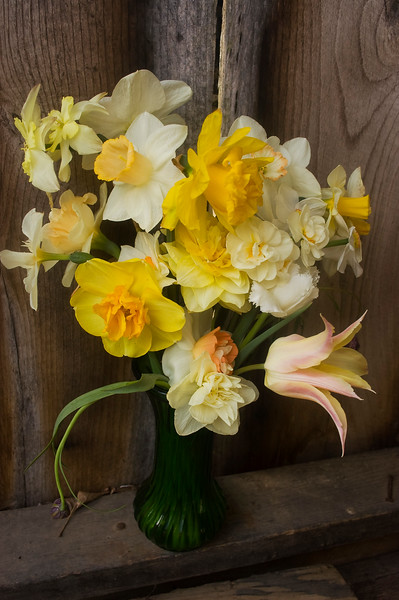 bouquet, spring (daffodils and tulips)