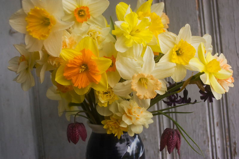 bouquet, spring, daffodils, hyacinth, and fritillaria