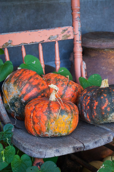 Cucurbita (winter squash)