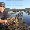 4197: Harvesting oysterbeds in Knysna lagoon.