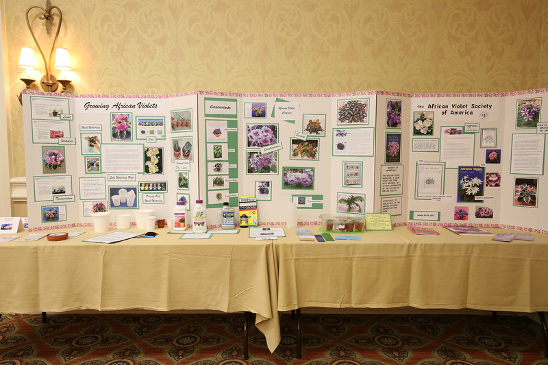Education Project Boards, learning about African Violets