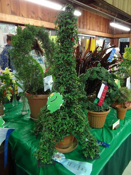 Topiaries, Hedra helix, English ivy