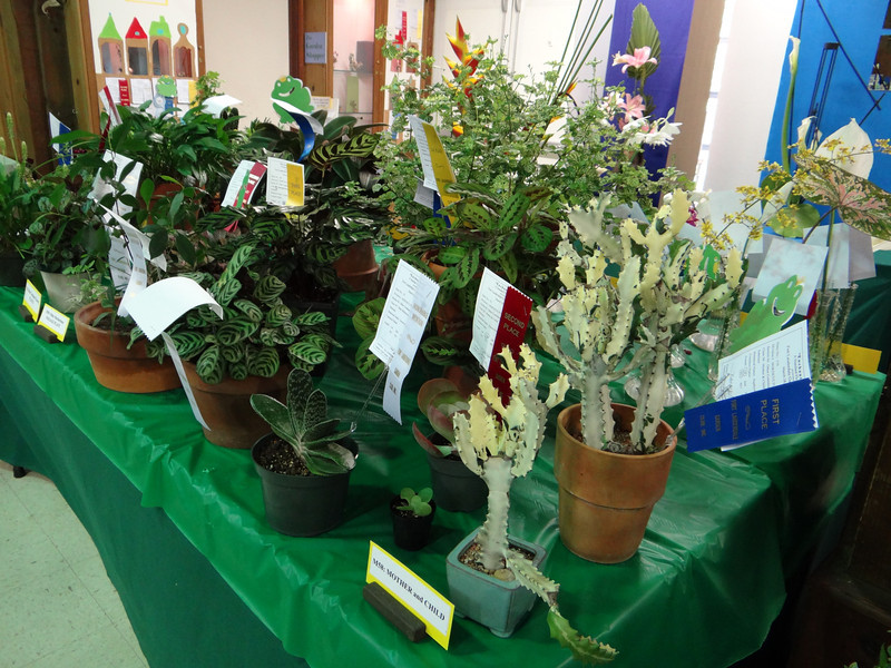 Plants on display