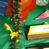 Gesneriad, cut vine, Columnea, Carnival