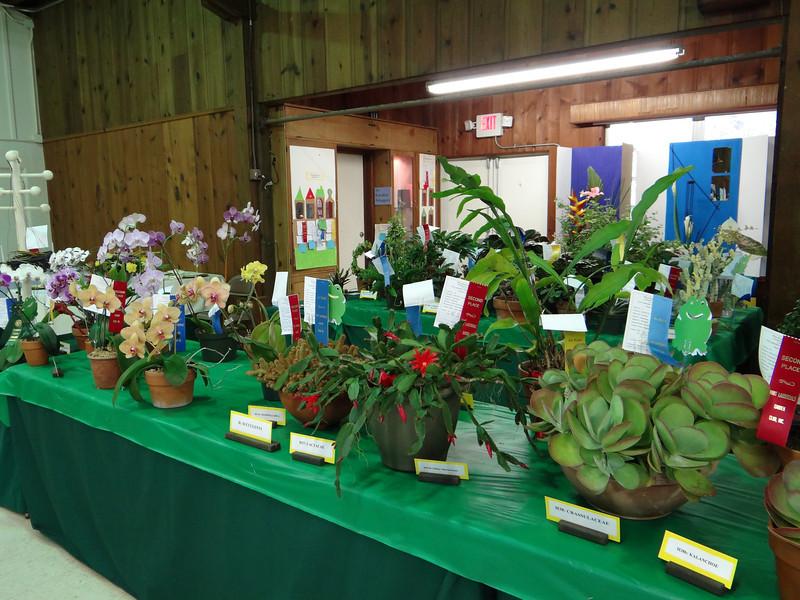 Plants on display