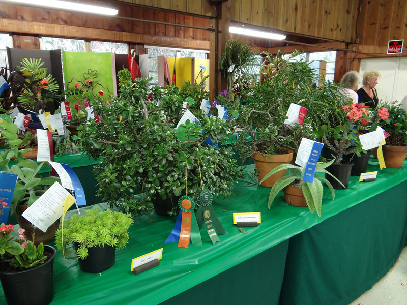 Best in Show, Jade Plant won by Maggie Dunn (center with ribbons).