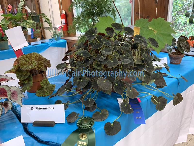 Begonia entries