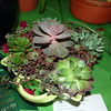 Grower's Choice Award  Succulents