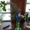 Best Arborial Cutting<br /> Cupresses arizonica