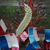 Cut Specimens<br /> Aechmea Maria Regina<br /> Bromeliad