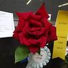 Hybrid Tea Rose<br /> Silver award winner