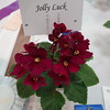 Jolly Luck<br /> African violet